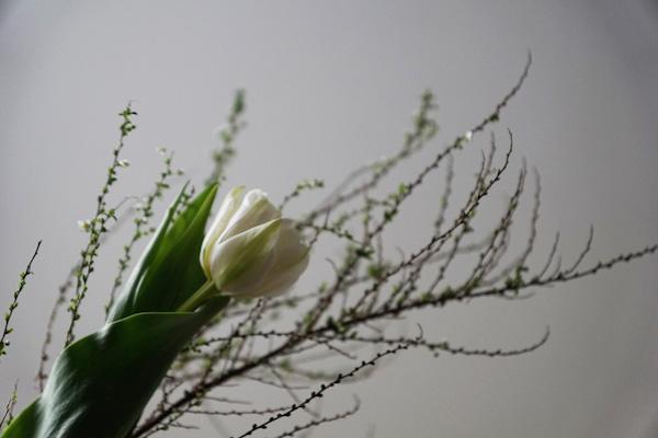 植物と人をつなぐもの 第1話(後編)|心を揺さぶり、壁を超える力を与えてくれるもの。それは人であったり、花一輪であったり。