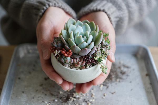 植物と人をつなぐもの 第2話(後編)|つくって贈る。はじめてでもすぐできる!多肉植物の寄せ植えのつくり方。