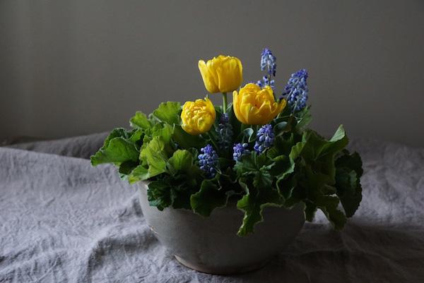 植物と人をつなぐもの 第3話(後編)|黄色いチューリップは、内気な少女を元気づけた思い出の花。紫のムスカリを添えて心弾む春一番のアレンジを。