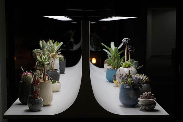 植物と人をつなぐもの 第4話(前編)|多肉植物を「進化するアート」に。植物本来の「生きる」というテーマを伝え続ける。
