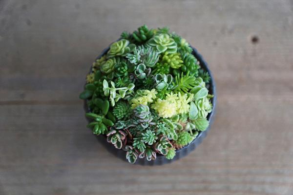 植物と人をつなぐもの 第7話(後編)|多肉植物の小葉を使って、ブーケのような可愛い寄せ植えをつくる。