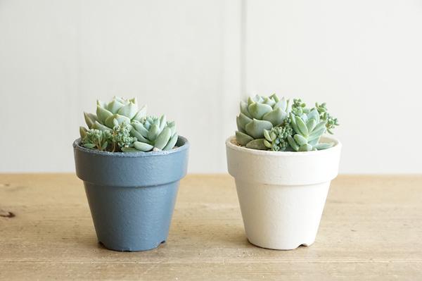 植物と人をつなぐもの 第8話(後編)|色違いのポットで、小さな葉の多肉植物の寄せ植えをつくる