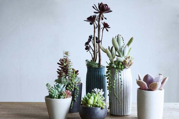 植物と人をつなぐもの 第9話(前編)|多肉植物の表現力をふくらませてくれる、陶芸家・飯高幸作さんの器。
