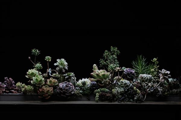 多肉植物と触れ合うトキイロさんの展示会。「光、影なくして知れず。愛、植物 (キミ)なくして知れず」2019.11.6(Wed)- 11.10(Sun) 東京