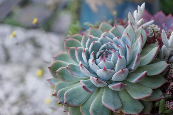 植物と人をつなぐもの 第12話(前編)|「光」と「愛」。目に見えない大切な2つを多肉植物に映し出す。