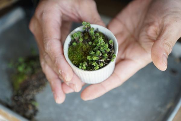植物と人をつなぐもの 第12話(後編・最終回)|たどり着いた究極の寄せ植えは、生命の神秘を感じる地球の姿そのものだった!