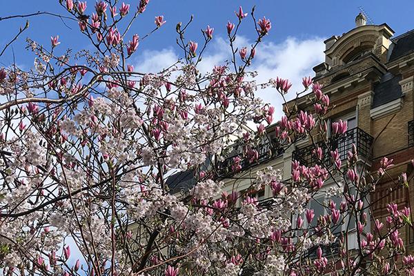 パリスタイルで愉しむ 花生活12か月 第4話 桜と木蓮