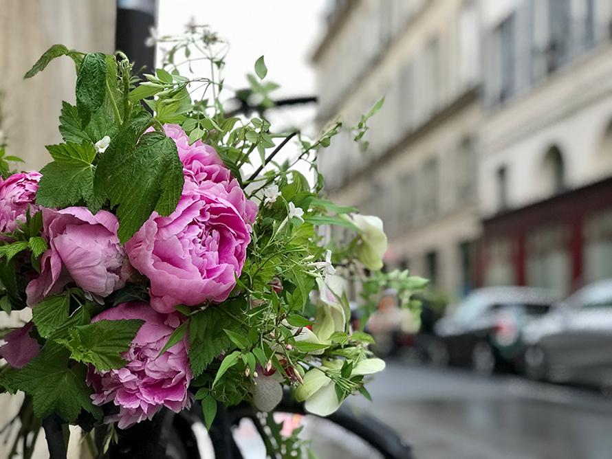 パリスタイルで愉しむ 花生活12か月 第7話 ピヴォワンヌ(シャクヤク、ボタン)