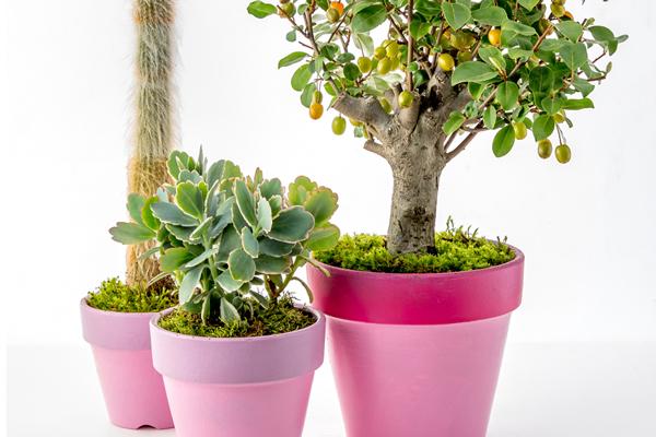 ピンクと植物とアートで、勇気と希望を! ニコライ・バーグマンさんの「AFTER CORONA」EXHIBITION 2020.6.2 (Tue)-8.2(Sun) 東京