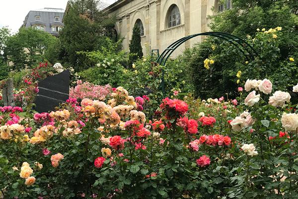パリスタイルで愉しむ 花生活12か月 第10話 ローズ・ド・ジャルダン パリのバラ園