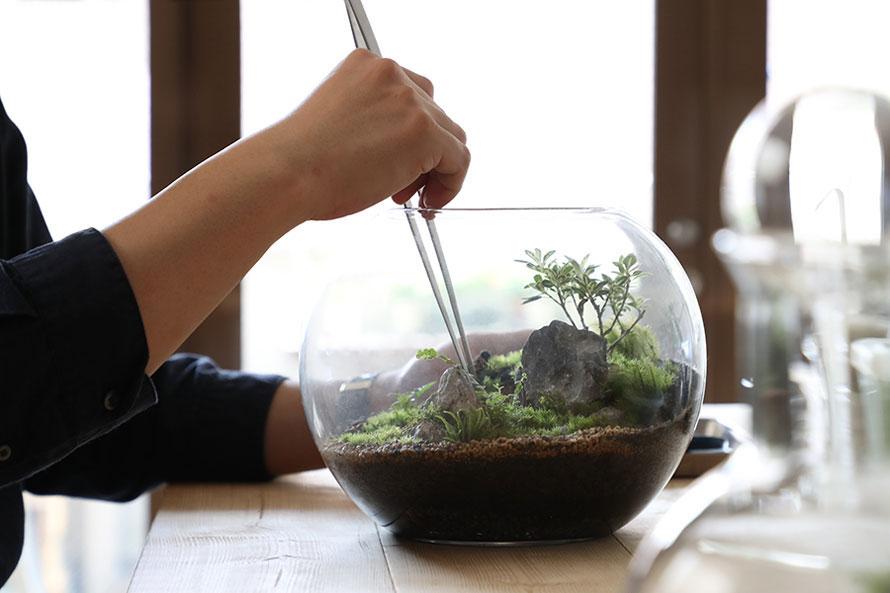 川本毅さん(後編)|苔のテラリウムはもっとも手軽なインテリアグリーン。植物と暮らすことがもっと身近に。