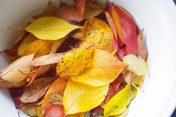 枝から舞った紅葉を押し葉に仕立てて暮らしに迎え入れる|小雪その2