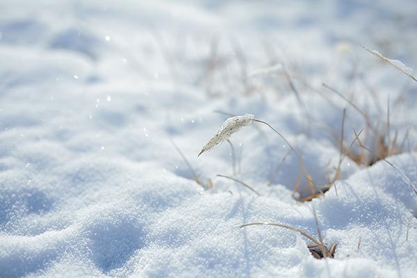 節の話「春の七草」|小寒