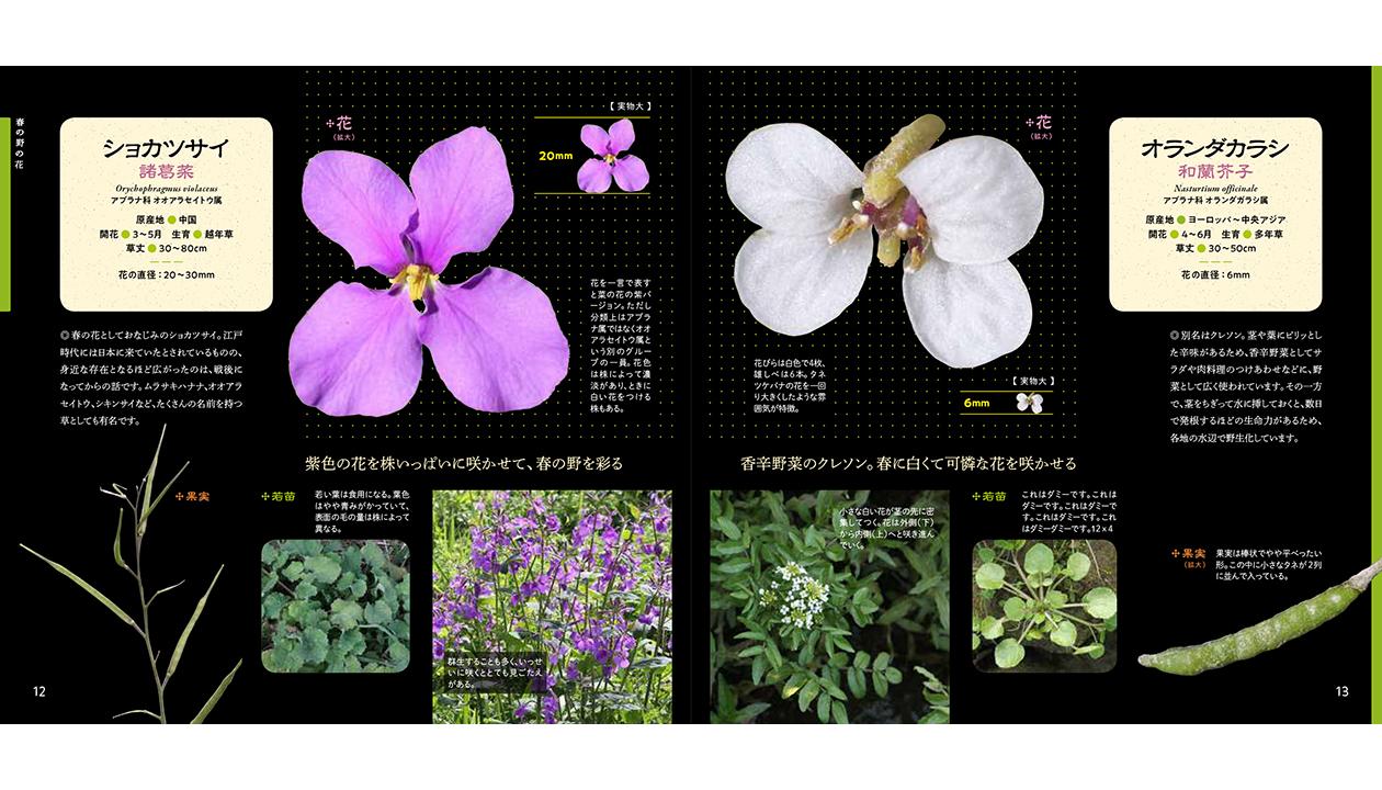 野の花 拡大図鑑