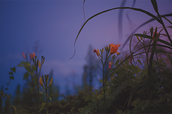節の話「秋の七草」|立秋